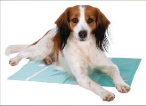 hűsítő matracon fekvő kutya